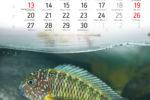Aukcje WOŚP Kalendarz KMT 2020