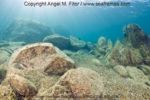 Magiczna podróż do podwodnego świata TANGANIKI